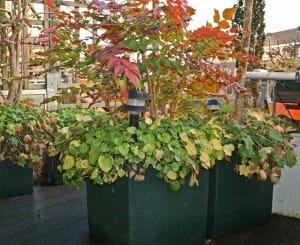 plantenbak voor dakterras